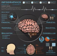 Brain And Nervous Anatomy System Medical Infographic Infochart Design Template , Nervous System Anatomy, Brain Nerves, Image, Presentation, Royalty, Medical, Template, Chart, Free