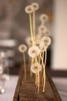 dandelion centerpiece...i can't even image how to execute this without the wishies blowing all over the place.