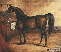 Godolphin Arabian, one of my American Quarter Horse's earliest ancestors that can be found on his pedigree. Arabian Stallions, Arabian Horses, Old Paintings, Horse Paintings, Horse Sketch, Arabian Art, American Quarter Horse, Racehorse, Horse Sculpture