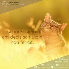 Happy Again, Romania, Cats, Animals, Google, Gatos, Animales, Animaux, Kitty