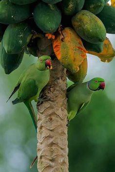 """ My Love"" - Bird's & Wildlife All Birds, Cute Birds, Pretty Birds, Tropical Birds, Exotic Birds, Colorful Birds, Most Beautiful Birds, Animals Beautiful, Like Animals"
