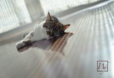 Humans and pets alike enjoy the feeling of radiant heated floors.