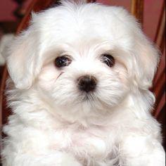 :) looks just like my sweet mimi girl!!