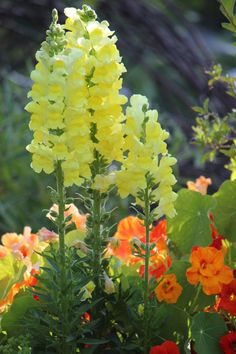 Snapdragon GARDENING multicityworldtravel.Com For Hotels-Flights Car Hire Bookings Globally Save Up To 80% On Travel