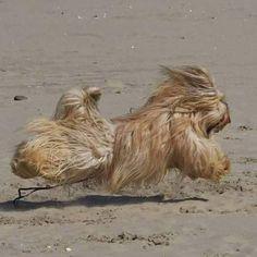 Run like the wind!