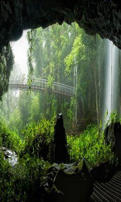 Crystal Shower Falls, Wonga Walk, Dorrigo National Park, N.S.W.