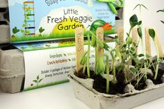 I love this idea but I think I will DIY with old egg cartons and buy the other supplies as ne The same fun seeds as our Little Bunny Garden, just a different package without the bunny!  Egg Carton Gardens include: 6 packages of heirloom seeds, starter soil, wooden plant ID stakes, growing instructions, growing journal, pencil and 100% recycled fiber egg carton planter!  Seeds: Green Beans, Yellow Summer Squash, Sweet Baby Carrots, Crunchy Red Radishes, Baby Watermelon and Little Leaf…