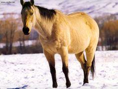 Vinton Quarter Horses-Breeding Foundation American Quarter Horses with ...