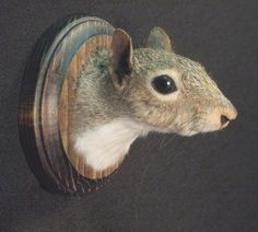 SQUIRREL TROPHY HEAD real animal rogue taxidermy sculpture novelty mount, perfect for father's day. $125.00, via Etsy.