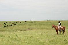On horseback at Ride the Flint Hills