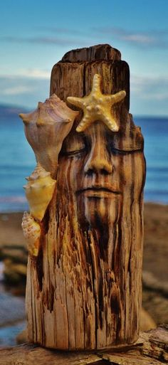 Driftwood Sculpture with Shells and by ShapingSpirit