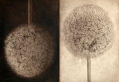 Lynn Shaler  Auracycle 12.75 x 18.25 in.Etching-Aquatint