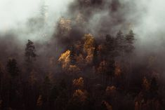 Atmospheric autumn forest of Norway in clouds Norway Landscape, Forest Landscape, Abstract Landscape, Forest Photography, Fine Art Photography, Landscape Photography, Travel Photography, Norway Forest, Wall Art Prints