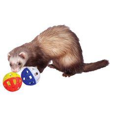 #balle en plastique #marshall pour #furet https://www.monfufu.com/jouets-pour-furets/264-marshall-balle-plastique-pour-furet.html