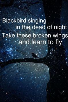 7) Something lyrical  -- Blackbird - The Beatles