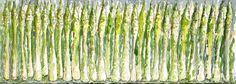 Acquerello di Luca Moretto. Asparagi. Studio per i laminati degli arredi dell'aula verde del dipartimento di Informatica dell'Università degli Studi di Torino - al centro Piero della Francesca. www.lucamoretto.it