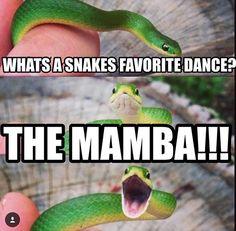 Snake jokes!