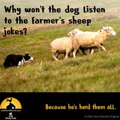 Why won't the dog listen to the farmer's sheep jokes?