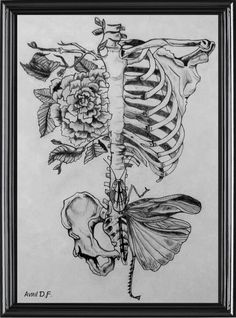 Drawing On Creativity Would be nice as a tatoo, no ? Illustration by Rebecca Ladds Drypoint Etching, Kunst Tattoos, Herz Tattoo, Desenho Tattoo, Anatomy Art, Human Anatomy, Body Anatomy, Anatomy Drawing, Wow Art