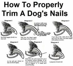 Can I Clip My Dog S Nails With Human Clippers