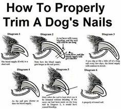 1000 Images About Dog Health On Pinterest Poodles