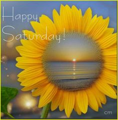 GOOD MORNING! HAPPY SATURDAY! GOD BLESS. #goodmorningpost #goodmorning #gmw #gm #goodday #good #morningpost #posts #morning #happysaturday #happy #saturdays #saturday #public #google #blessing #blessings Sunflower Garden, Sunflower Art, Sunflower Fields, Sunflower Quotes, Sunflower Pictures, Happy Flowers, Beautiful Flowers, Sun Flowers, Afrique Art