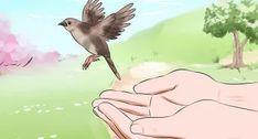 Nutrire un Uccellino