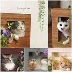 ■ 長毛猫さんのたてがみ の画像 Hinali's blog!