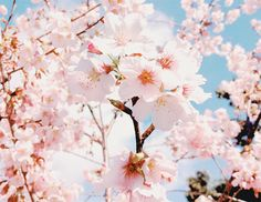 beautiful, blossom, flores, flowers, lovely, o, spring