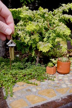 Pocket Paradise: Author Janit Calvo on hew new book Gardening in Miniature, Alien Sunflowers, and Other Small Wonders! Check out more adorable gardens on our Miniature Gardening board!