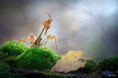 Una mantide tra i boschi by Roberto Aldrovandi on 500px
