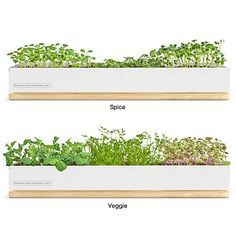 Window sill herbs & veggies