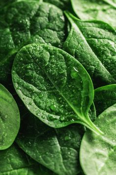 Macro photography of fresh spinach. Concept of organic food. - Macro photography of fresh spinach. Concept of organic food. Macro Photography Tips, Fruit Photography, Levitation Photography, Exposure Photography, Photography Awards, Iphone Photography, Photography Backdrops, Abstract Photography, Beach Photography