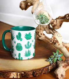 "667 Likes, 3 Comments - کاکتوس🌸ساکولنتcactus🌵succulent (@amin_hajimohamadi) on Instagram: ""📷 : @madloveshop #🌵 #cactus #succulent #succulents #cacti #cacto #kaktus #кактус #多肉植物 #多肉 #サボテン…"""