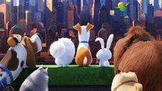 ™ The Secret Life of Pets 2 Teljes Filmek Videa HD Joel Mchale, John Mulaney, Pets Movie, 2 Movie, Tina Fey, High School Musical, Netflix, Shrek, Pet Trailer