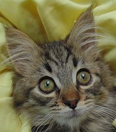 Einstein is available for adoption! Call us at (858) 676-1600!