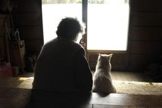 みさおとふくまる by 井原美代子 Misao&Fukumaru ©️Miyoko Ihara Watching the world together (Misao and Fukumaru the cat) Amor Animal, Son Chat, Cat Watch, Children's Picture Books, Beautiful Cats, Cat Art, Funny Cute, Animal Pictures, Cats And Kittens