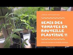 Semis de tomates en bouteille pour réussir ses plantations de tomates. Suivez pas à pas ma culture de la tomate 2018 en bouteille avec 100% de réussite. Facile et économique. Je vais bientôt commencer mes semis de tomates 2019.