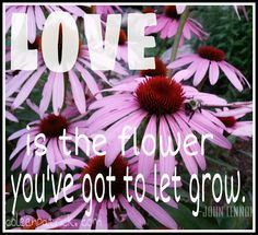 Love is the flower you've got to let grow. John Lennon #quote