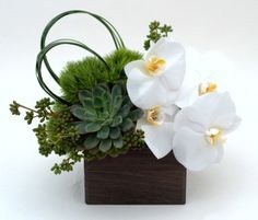 Zen White Garden - White orchids and succulents - A long lasting modern and unique arrangement of green dianthus, succulents and white phalaenopsis orchids.