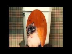 ▶ farting cat - YouTube