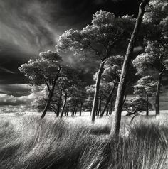 Kippen Muir Pines by michael prince, via Flickr