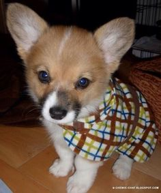 Adorable wearing his first coat.