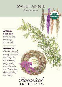 Organic Sweet Annie Artemisia Seeds - 300 mg