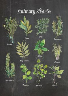A3 11x14 in Culinary Herbs Chalkboard Wall Poster by ThePaperWing