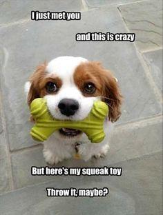 33 Funny Animals Memes #funny #animals www.destinpinas.com/