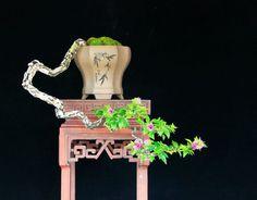 .cascading literati bonsai in octagonal pot