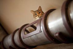 Steampunk Cat Transit System Shuttles Kitties across Mad Scientist's Secret Lab #cats #CatTunnel #steampunk