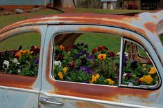 Old rusty VW as pansy planter