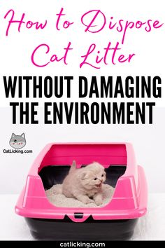 How to Dispose Cat Litter without Damaging the Environment - CatLicking